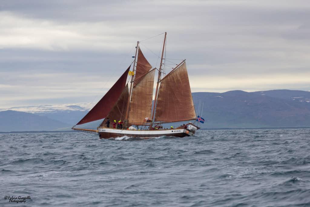 Islanda Dettifoss Husavik e l'avvistamento delle balene