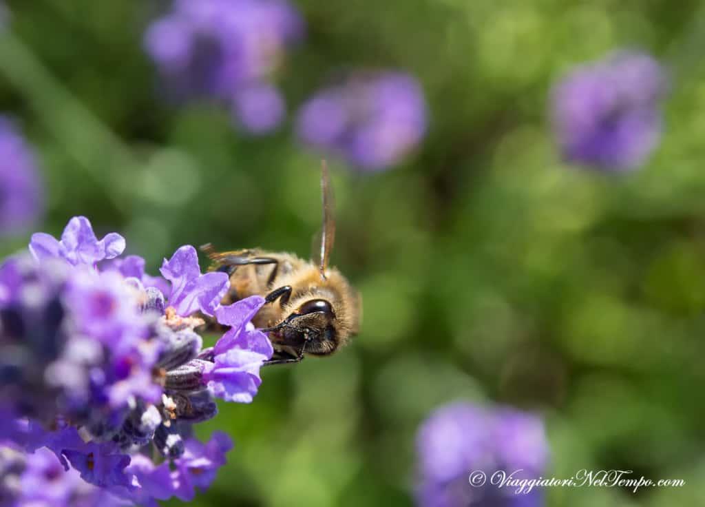 Provenza -amazing nature