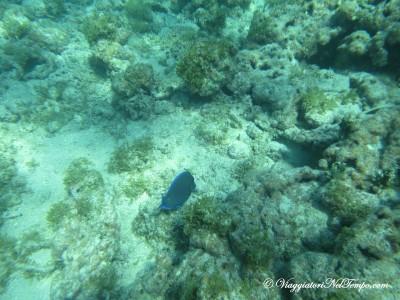 Isola Catalina giornata crociera caraibi