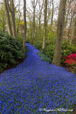 Keukenhof park visita parco tulipani